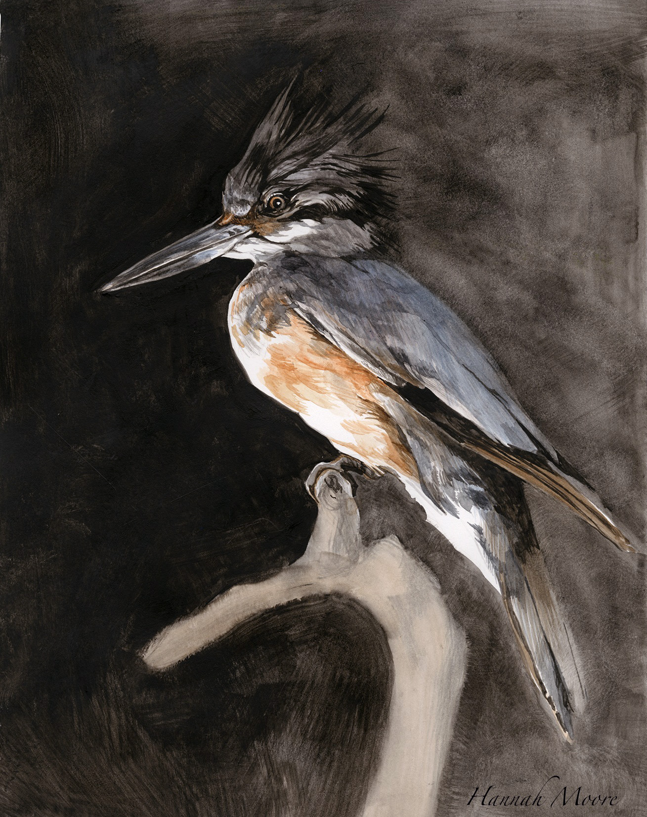 crow002